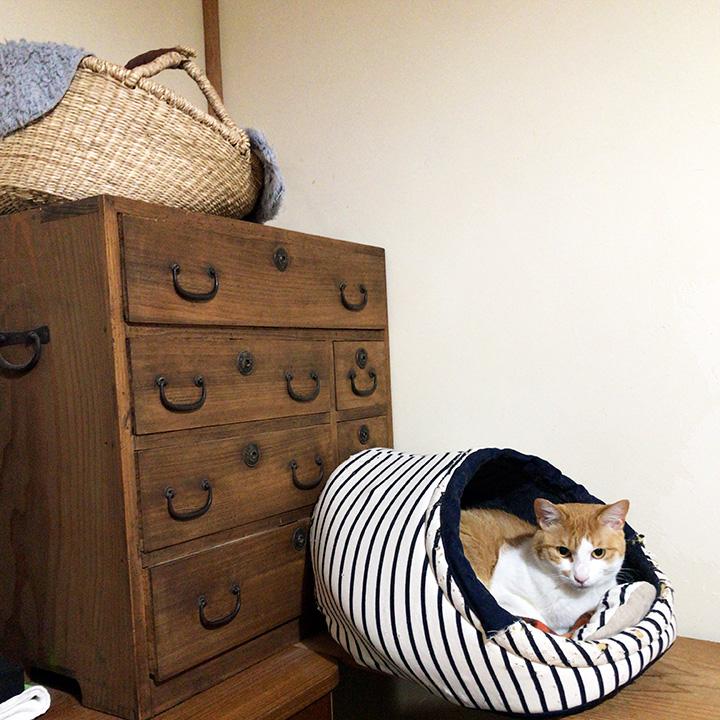S様邸の桐箪笥と猫